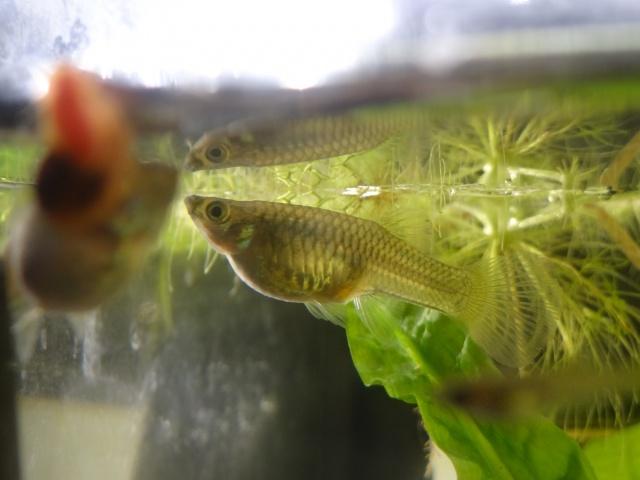 Ma Fish'étagère et les autres  - Page 15 589051DSC00283