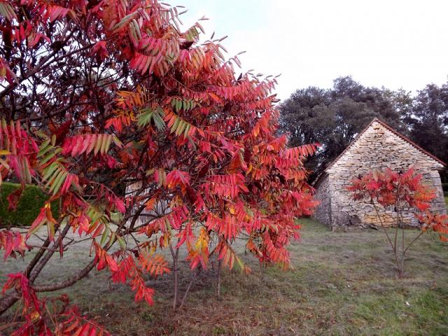 scènes d'automne - saison 2013 - Page 3 589502rhustyphina