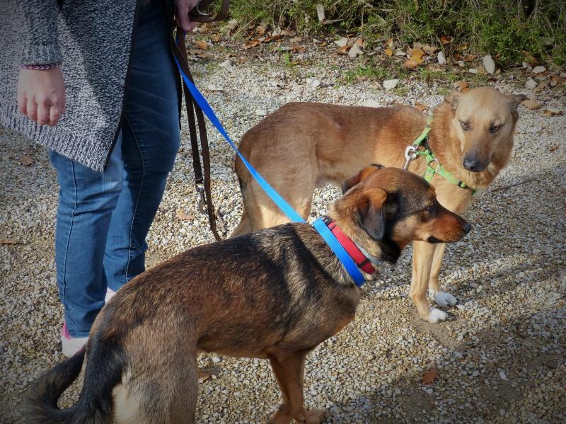 Tzupy, chien de notre quartier, mâle très sociable, né en 2009. 593784P1130309