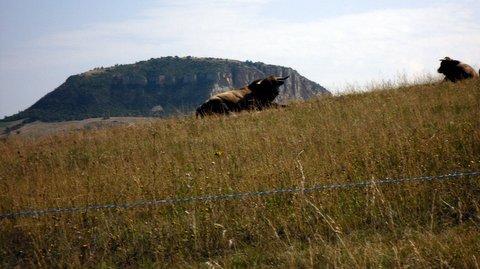 Ballade estivale entre Aveyron et Lozère 594362SDC15507