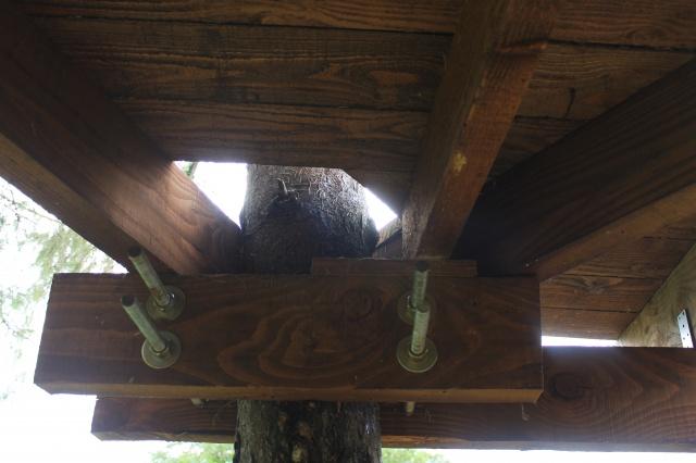 Arbres porteurs pour plateforme dans les arbres - Page 2 594787IMG3089