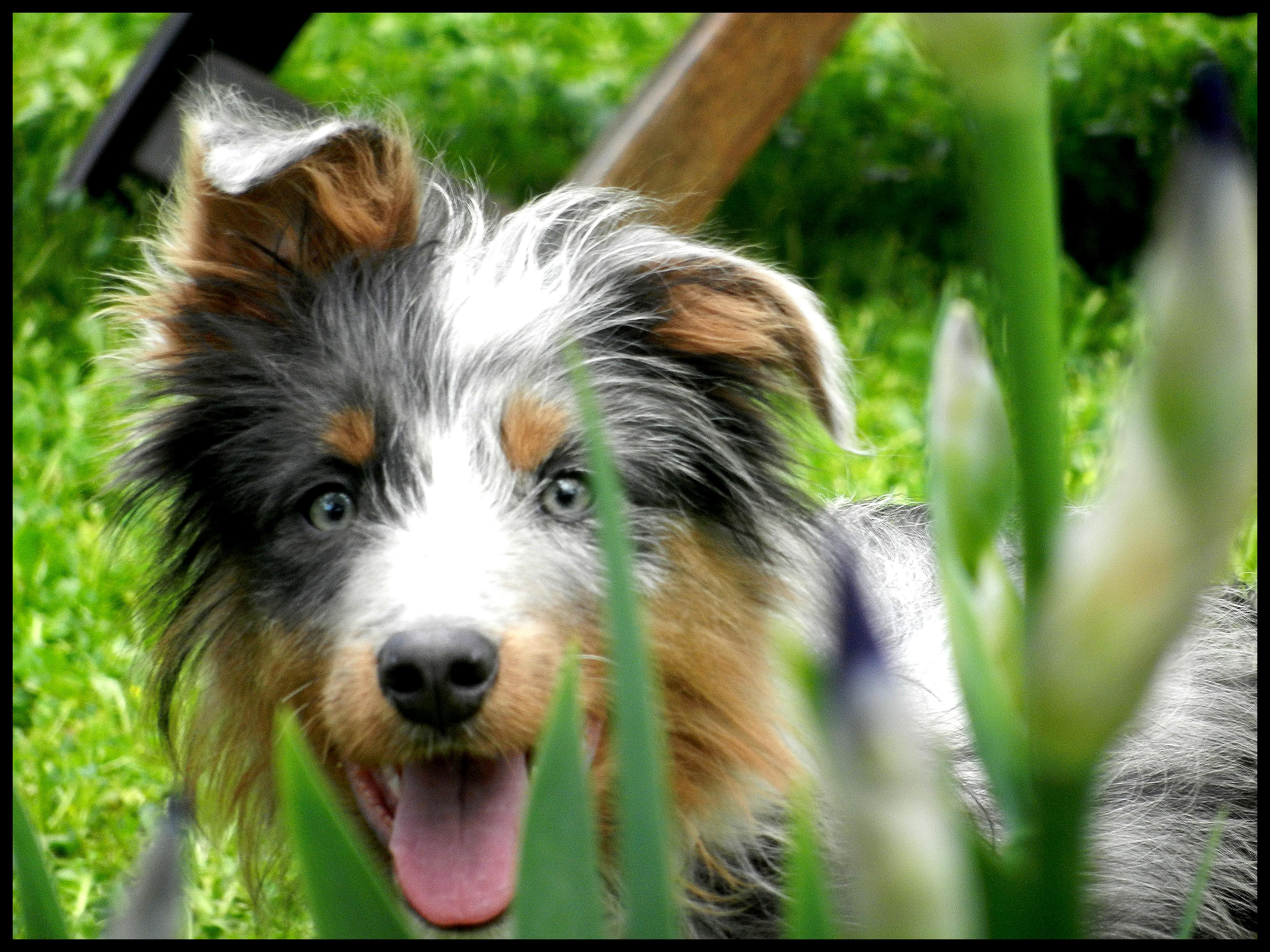 Qu'elle est le nom de vos/votre chien? Et Pourquoi? - Page 4 595584133