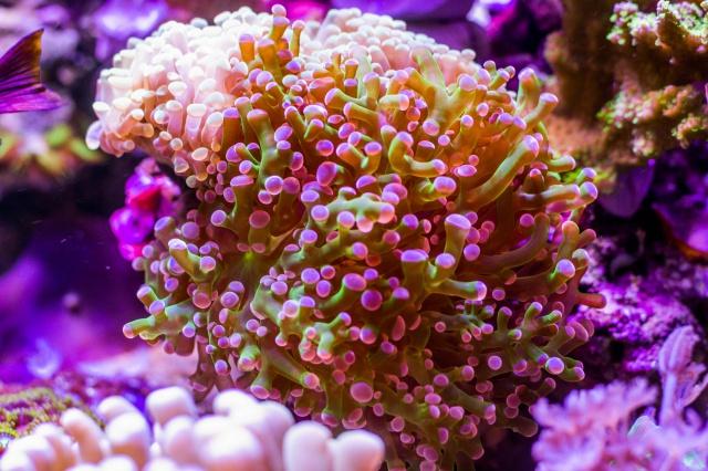 Mon premier aquarium eau de mer - Page 6 603529DSC0482