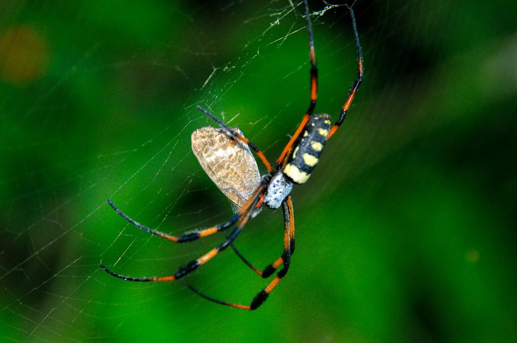 (FIL OUVERT à tous) vous aimez les araignées? 604098DSC84641311131129182