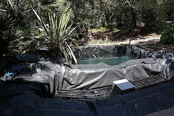 Bassin extérieur avec voiles de chine - Page 3 604755DSC09846