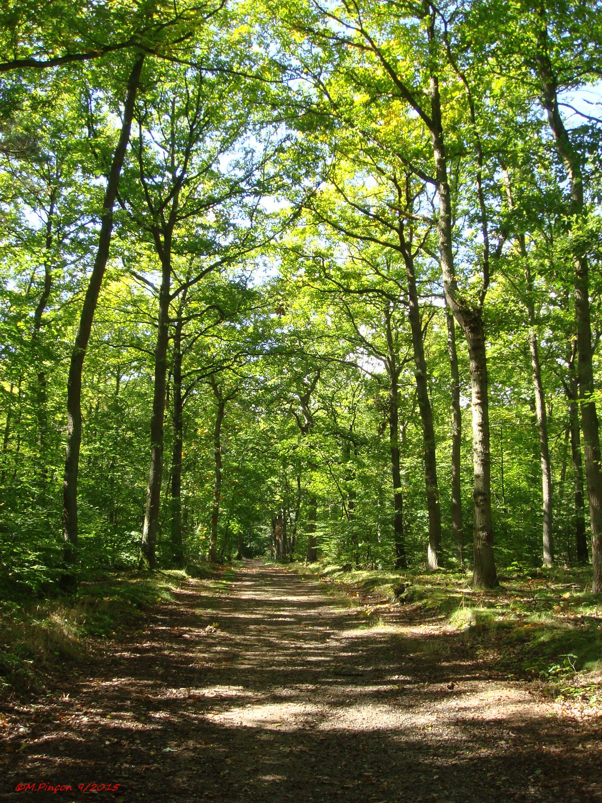 [fil ouvert] la forêt dans tous ses états 608893DSC09416