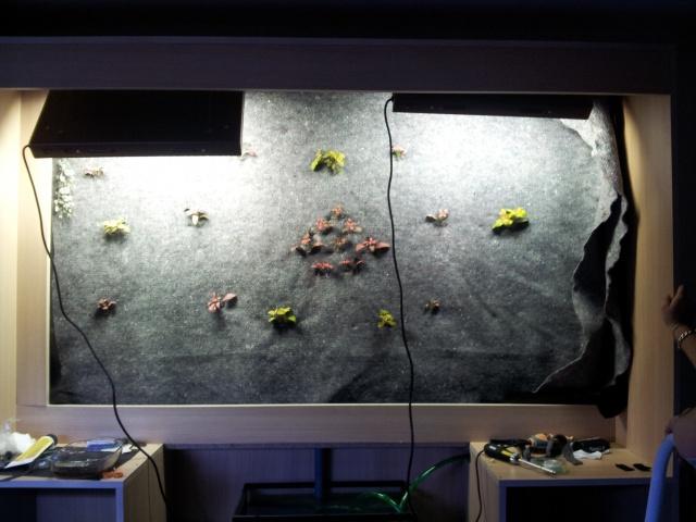 Le nouveau mur végétal de Olivetzou (projet fini à 98%) enfin les leds - Page 2 61659220120312193822