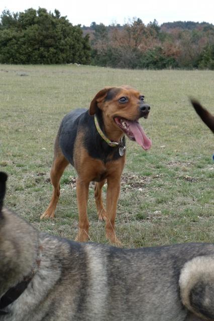 Photo de nos chiens batards! 617696924007appareilphoto101