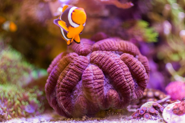 Mon premier aquarium eau de mer - Page 6 618149DSC0711