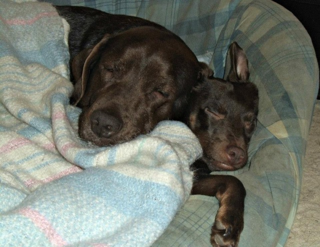 Photo de nos chiens batards! 6188614308691888467745938241111665110n