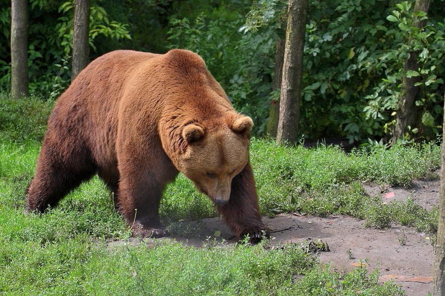 Sortie au Zoo d'Olmen (à côté de Hasselt) le samedi 14 juillet : Les photos 6218500411bis900