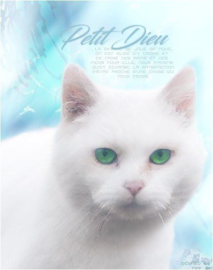 Piaf débarque ! - Page 2 627143510689f2c149af3fde58a2ad057471cb8cd932