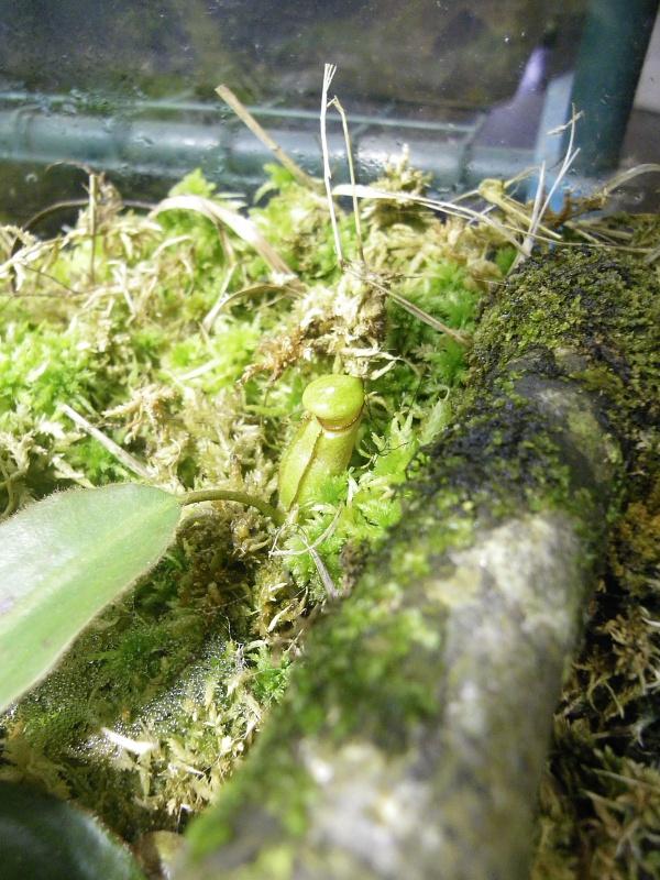Mon terrarium highland 630127IMGP1834