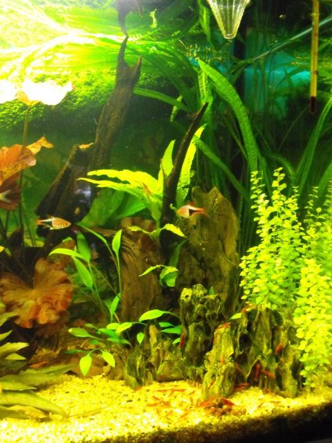 mes aquariums 632585120L2