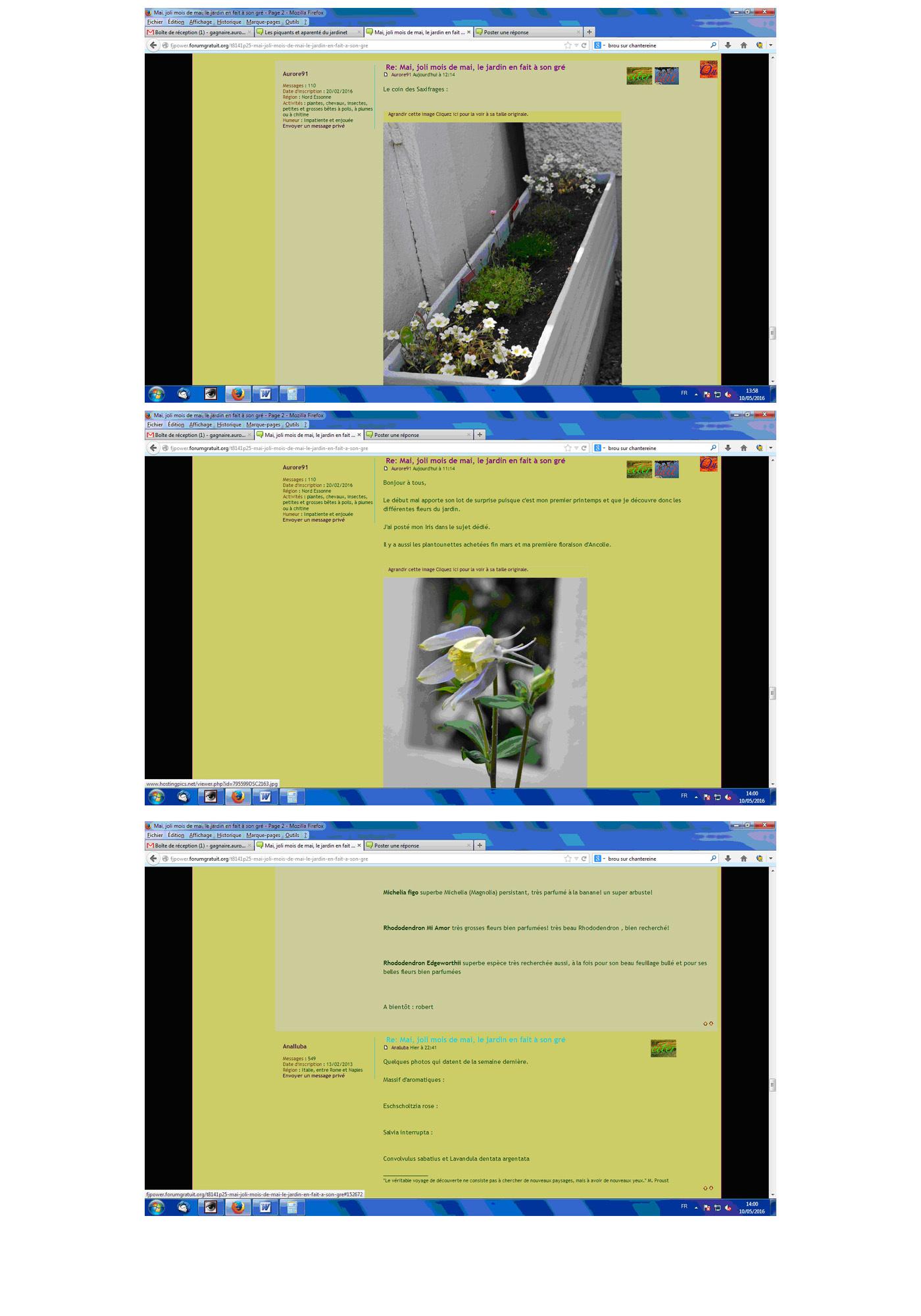 joli mois de mai, le jardin fait à son gré - Page 3 638503soucisaffichage