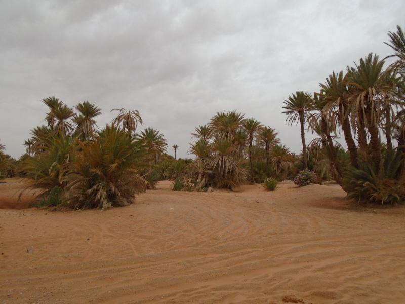 Maroc 2016 de Franck, Speedy et Maxou 640232DSC00490