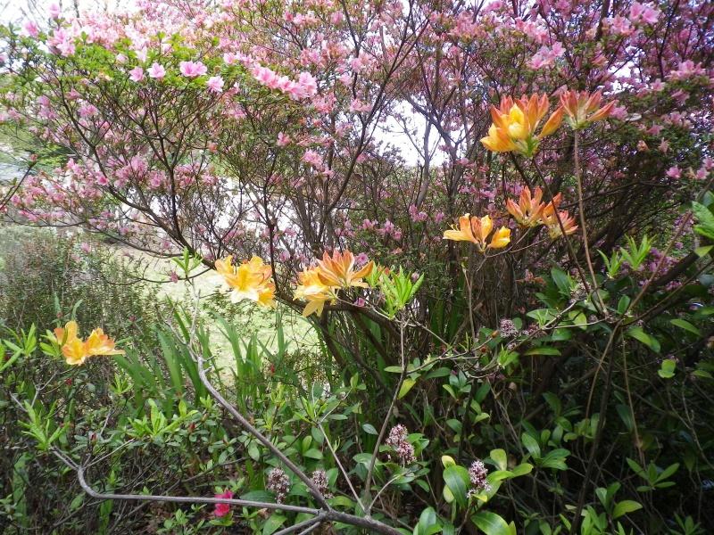 avril, jardin fébrile - Page 3 641399IMGP3989