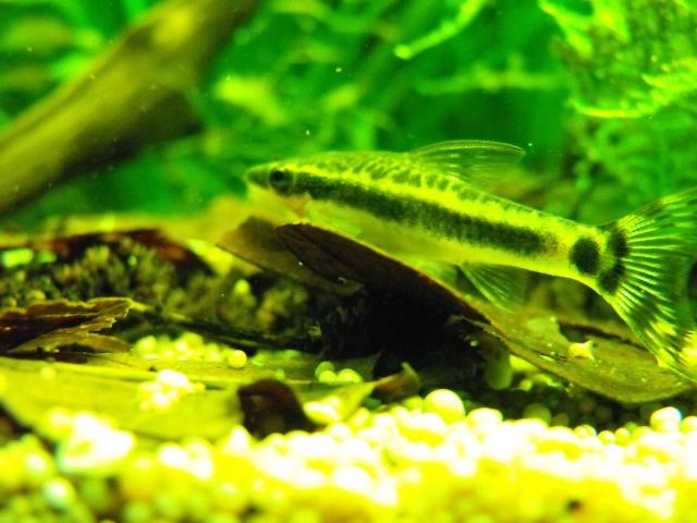 mes aquariums 641417MACROTOCINCL