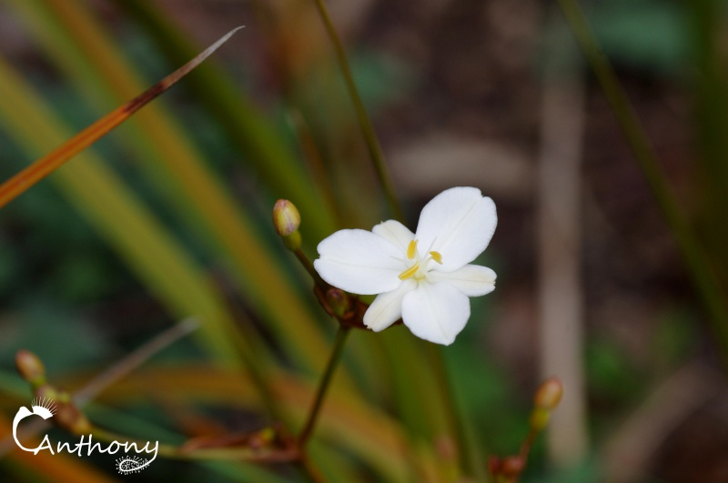 Fleur de graminée 642085IMGP5035