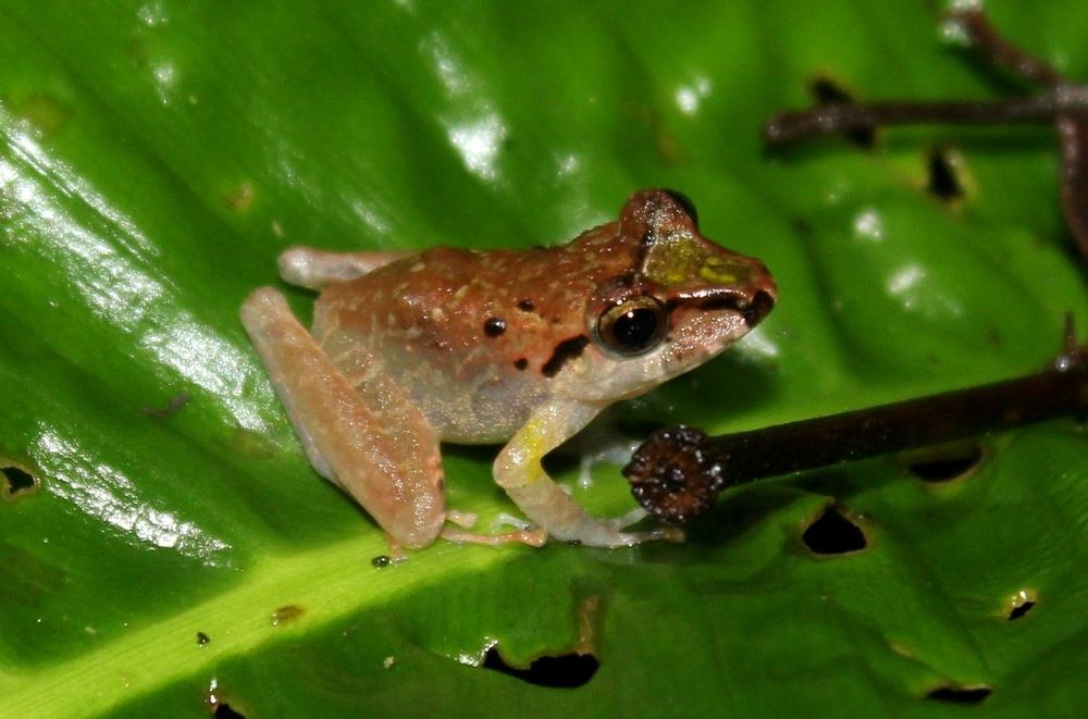 15 jours dans la jungle du Costa Rica - Page 2 649667crassi3r