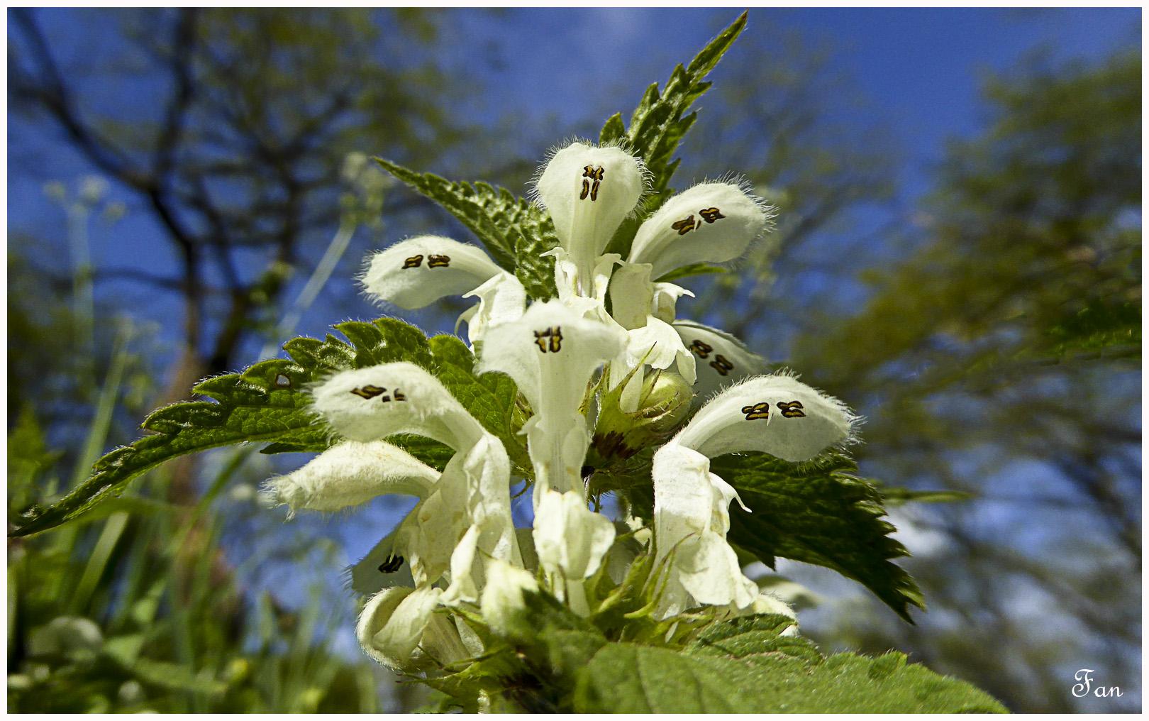 Fleurs de mes chemins - Page 3 650693P1020768bis