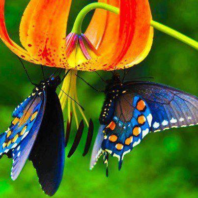 fleur du bresil 655355fleurorange