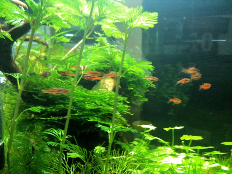 Mon Scaper's Tank 50L Aquascaping 656805IMG0389