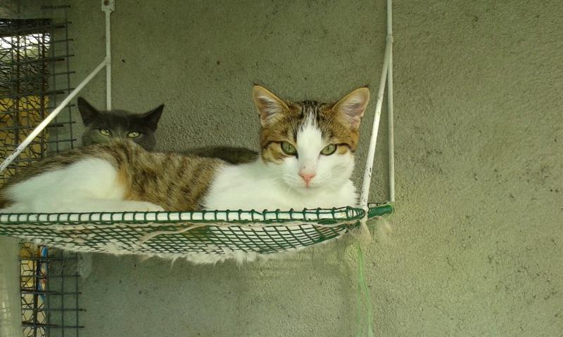 MUSHU (mâle tigré et blanc) 65783120141018160056