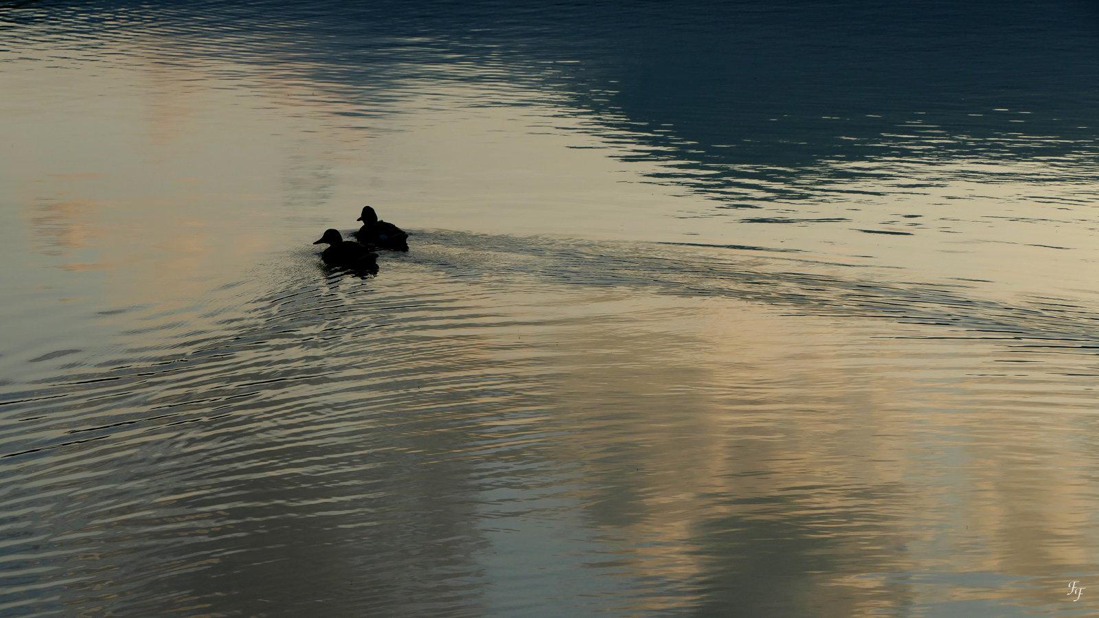 Promenade romantique au crépuscule 658003a20170614205727NocturneauLacChambon