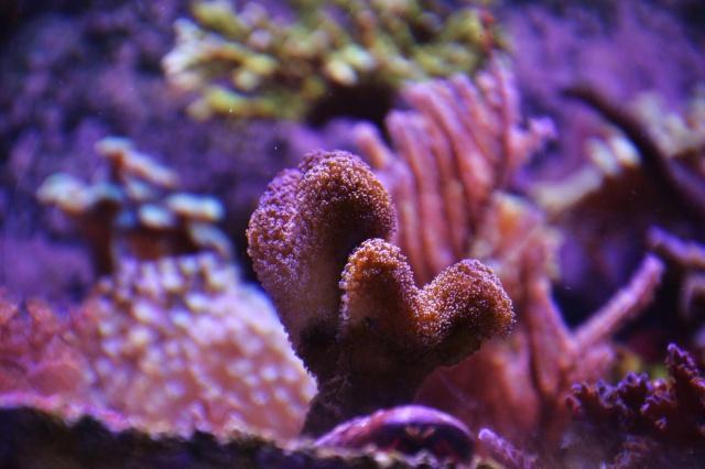 Mon premier aquarium eau de mer - Page 5 658885201508254