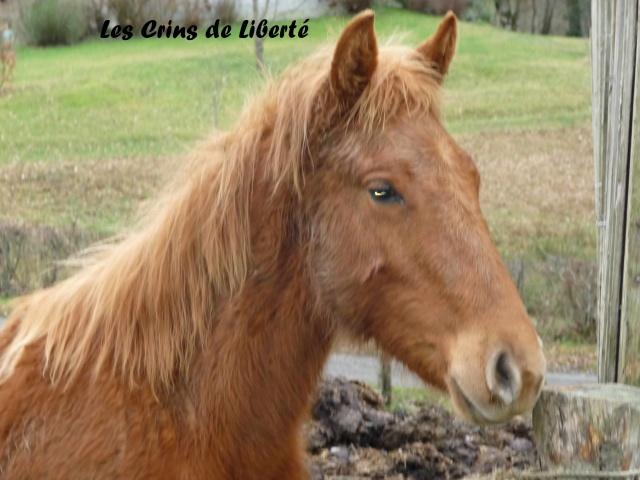 (Dept19) PRINCE poulain ONC, réservé par Gambs !!!!(juillet2012) - Page 2 661156P1010875