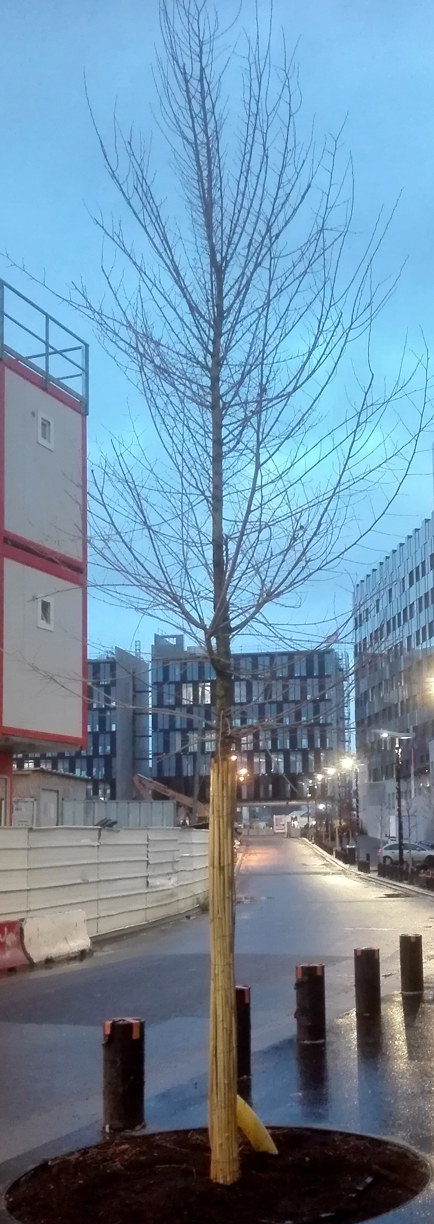 Plantation d'arbres en milieu urbain 662351IMG20171218082248