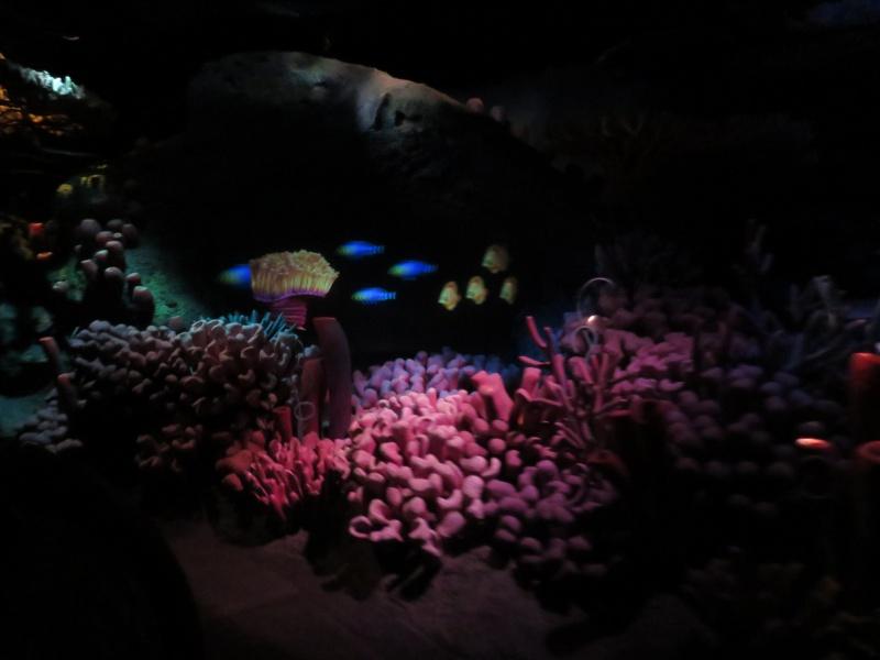 Walt Disney World + Universal Studios + Sea World + Busch Gardens Summer 2014 668441IMG0240