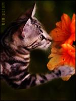 Nuage de la Ritournelle (Prise), Nuage du Lotus (pris), Nuage de Fée et Nuage du Paon (pris) sont nés ! 669051image2