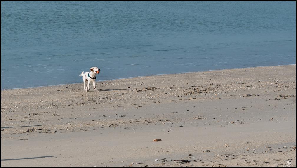 Morbihan: Suscinio, la plage 669687LR6P1410616