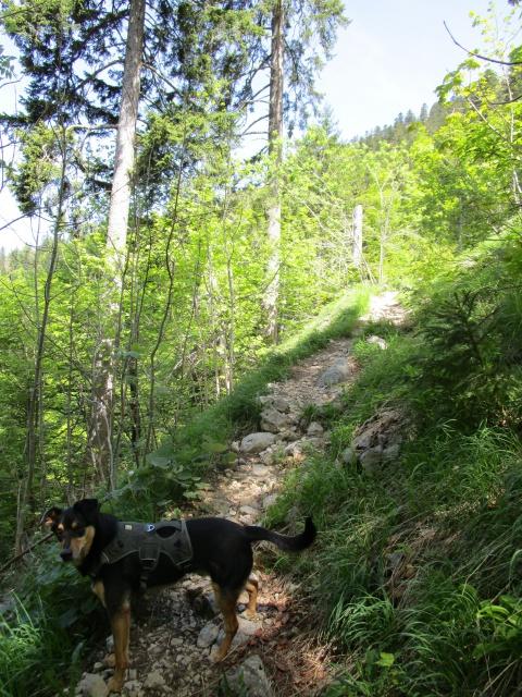 Kami, chien de randonnée - Page 18 670504IMG0628