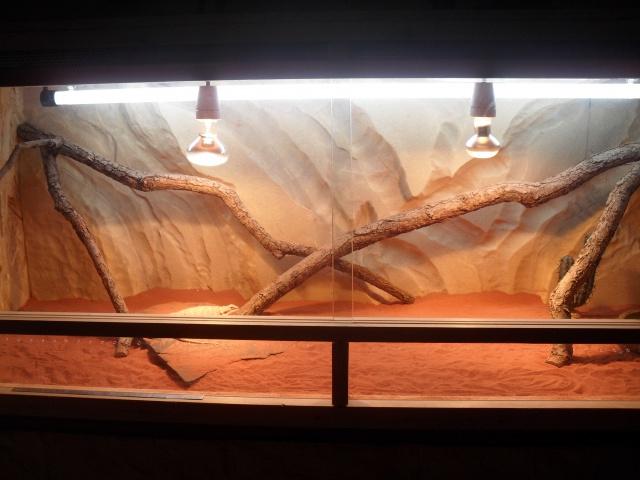 Mon nouveau terrarium - Page 2 673606SDC11880