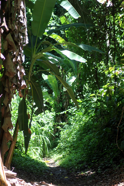 15 jours dans la jungle du Costa Rica 673947carara2r