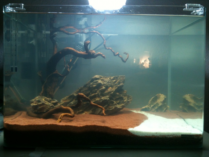 Mon Scaper's Tank 50L Aquascaping 674506IMG0278