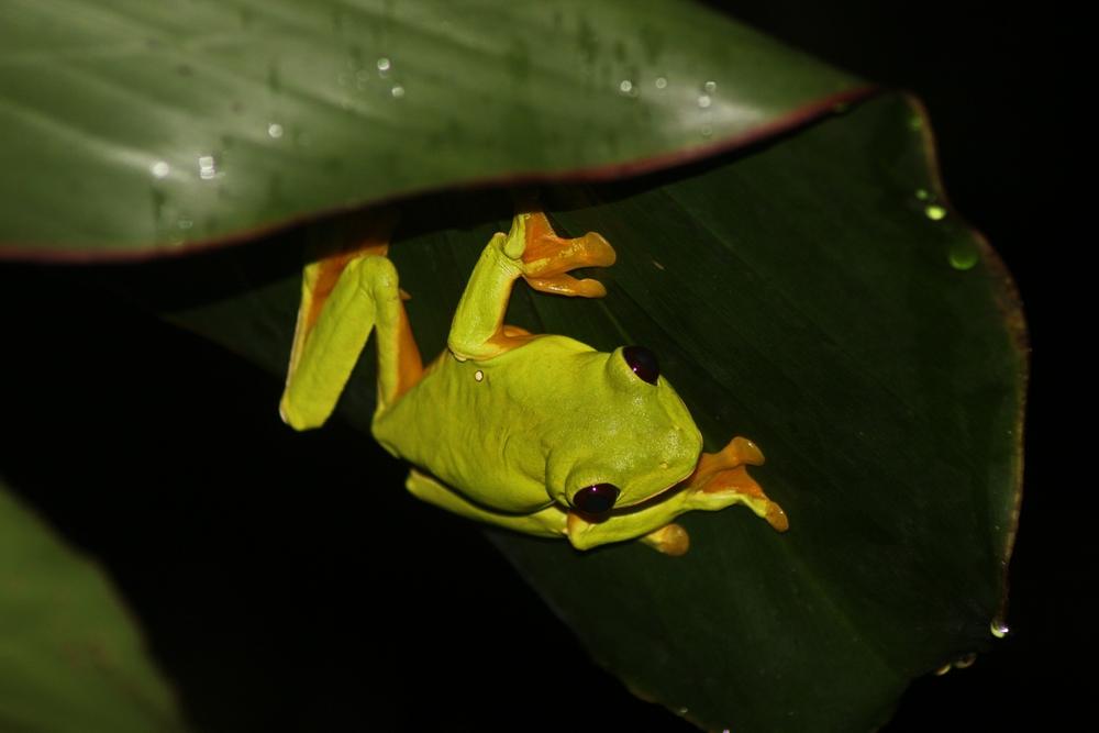 15 jours dans la jungle du Costa Rica - Page 2 677711spureli4r