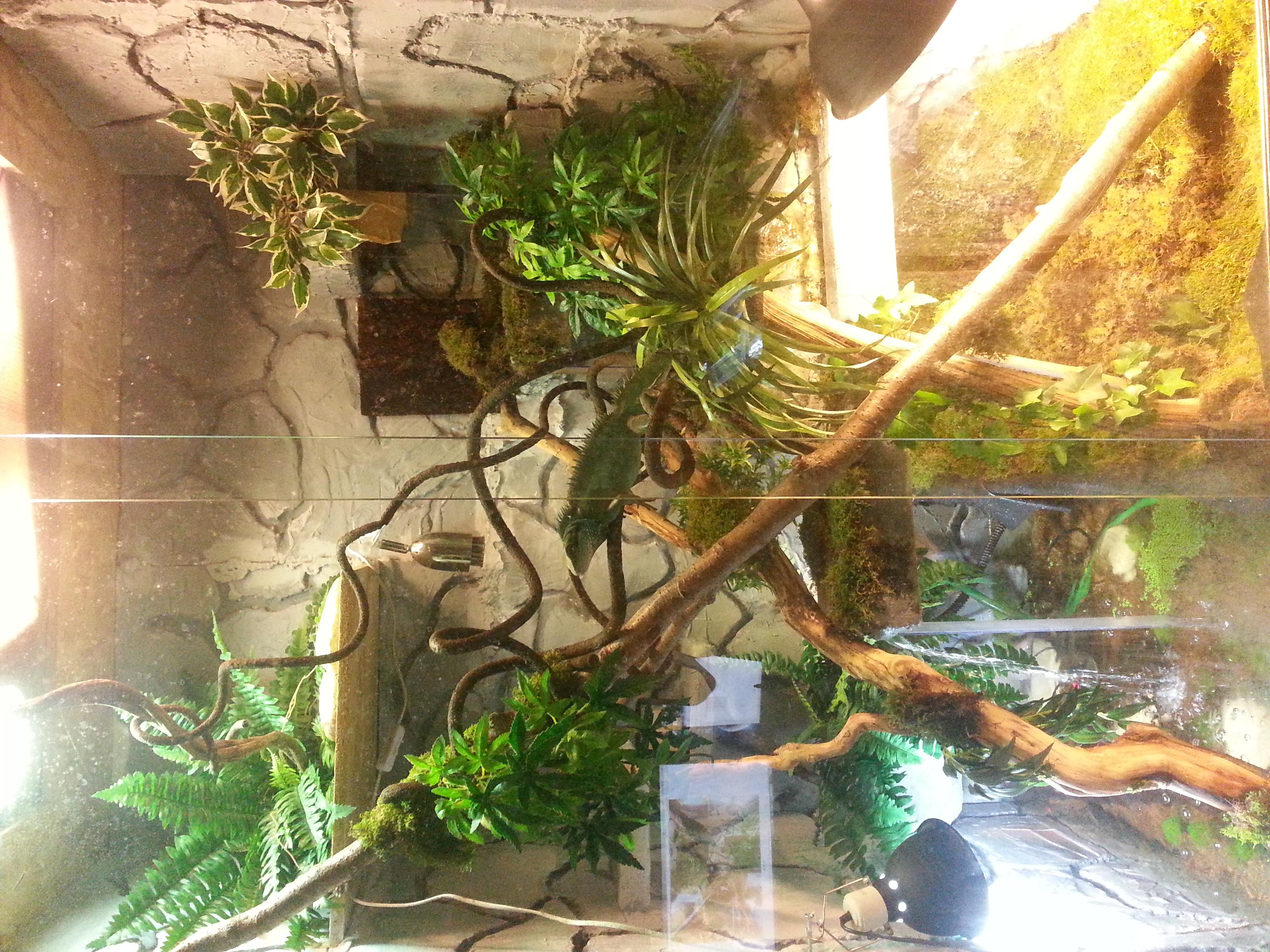 plante pour terrarium 67841620170415163152