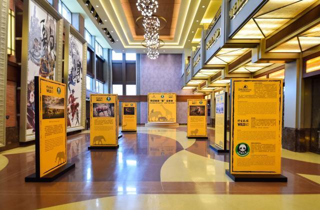 Shanghai Disney Resort en général - le coin des petites infos  - Page 5 679015w443