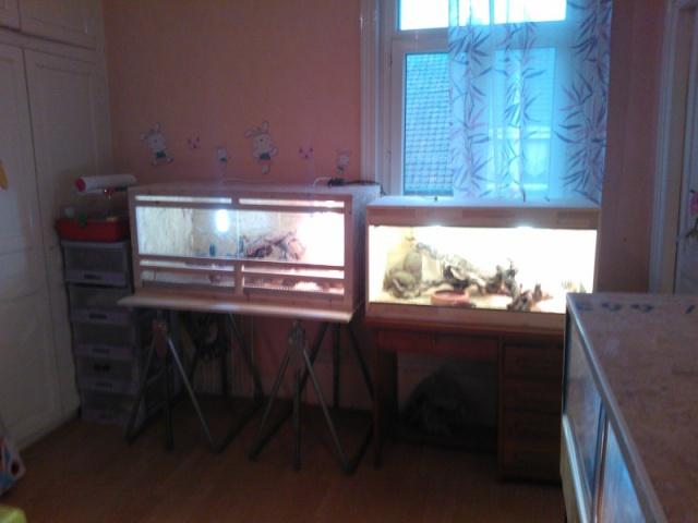Mon nouveau terrarium 679086wp00067