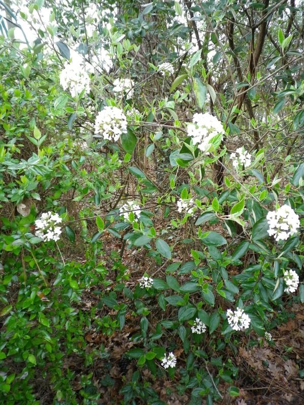 Quelques floraisons - Page 2 680678IMGP2606