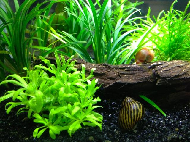 Mon SuperFish Home 25 681506IMG0061