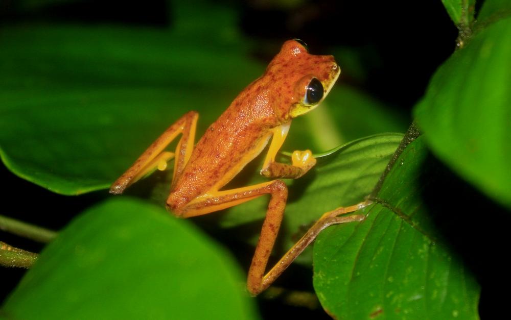 15 jours dans la jungle du Costa Rica - Page 2 681958lemur7r