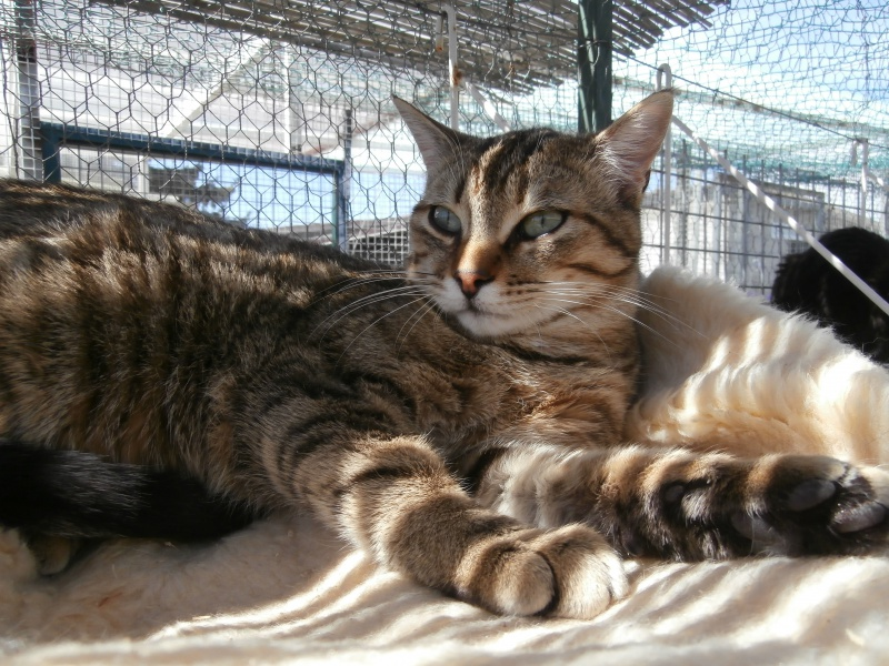 MELBOURNE (chaton tigré marron) 684623P4152549