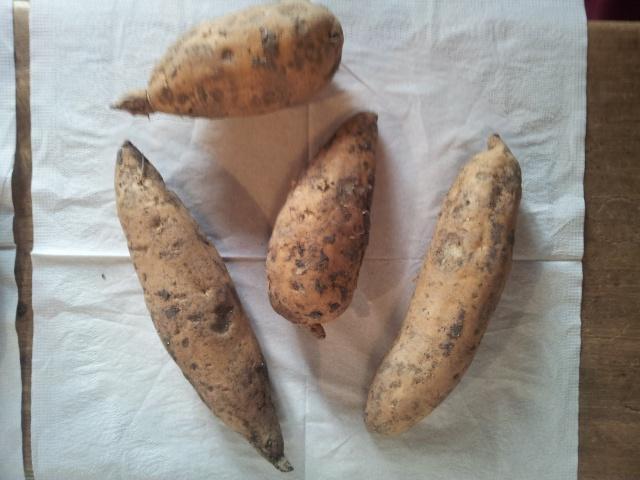 patates douces 68466420160130092709