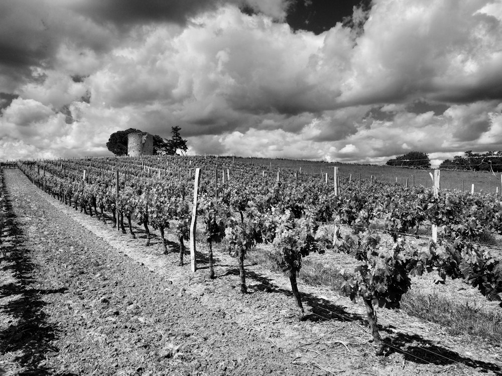 vignobles d'Armagnac. 687040barb012