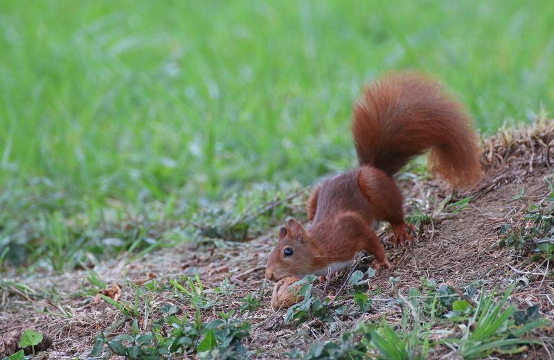 Mes petits copains écureuils. 6880536881